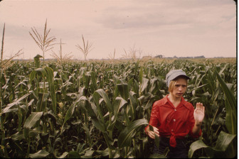Teenage Worker Detasseling Corn in a Field During the Summer near New Ulm, Minnesota. (between 1930 - 2008
