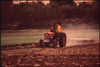 Navajo Boys Plow Corn Field on the Navajo Reservation, Shiprock, New Mexico, date unknown