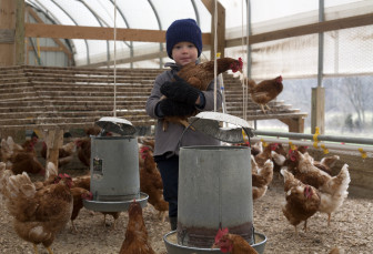Four-year-old Marcus Miller holds one of his father's chickens March 14, 2013,  at the family farm in Campbell Hill, Ill.