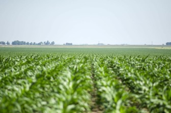 Prevented planting compensates farmers when they're unable to plant an insured crop due to weather. The Risk Management Agency set prevented planting for corn at 60 percent of the producer's guarantee.