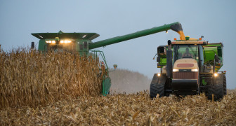 Harvest gets underway at the Anderson Farm near Mansfield, IL on Wednesday, Oct. 2, 2013. Similar corn operations throughout Illinois have chosen to use RP insurance more than 85 percent of the time.