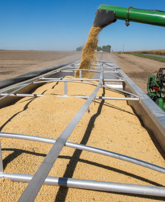 Soybeans are offloaded from the combine to a waiting truck as harvest continues just north of Mansfield, Ill., on Wednesday, Oct. 9, 2013.