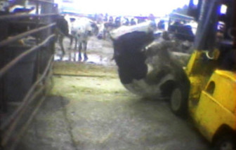 In 2008, an undercover Humane Society investigation into a California slaughterhouse produced video of workers abusing sick cattle. The video eventually triggered a major recall and multimillion dollar lawsuit. In Idaho, efforts similar to this would be illegal.