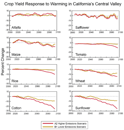 The above graphic shows projected yields for eight crops grown in the Central Valley of California. Projections are for two emissions scenarios, one in which gas emissions are reduced and one in which emissions continue to grow.