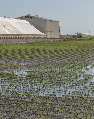 After a strong thunderstorm, water pools in a field near Fairmont, Ill., on July 1, 2014. Crop insurance can compensate farmers for crops lost due to flooding.