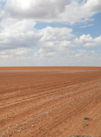 A failed Texas cotton field stretches to the horizon. In addition to protecting farmers' crops from drought, crop insurance can also protect farm income from sudden drops in market prices.