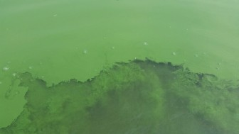 A photo of an algae bloom this summer on Green Valley Lake in Union County.