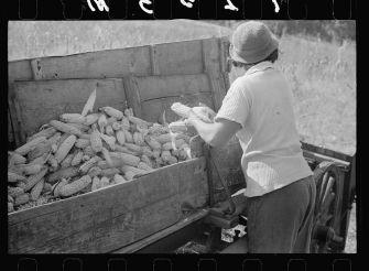 A woman shucking corn in 1938.