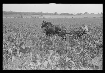 Cultivating corn in central Ohio, 1938.