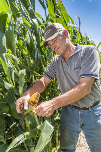 Farmer Paul Jeschke holds up an ear of corn at his farm near Mazon, Ill., on Aug. 20, 2015. Monsanto's higher yielding corn product would increase the size of an ear of corn by about 12 percent, the company claims.