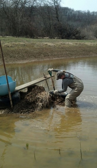 Ann Wolf uses several topsoil conservation practices at her eastern Iowa farm near Miles. Among them, she is restoring a stream bank.