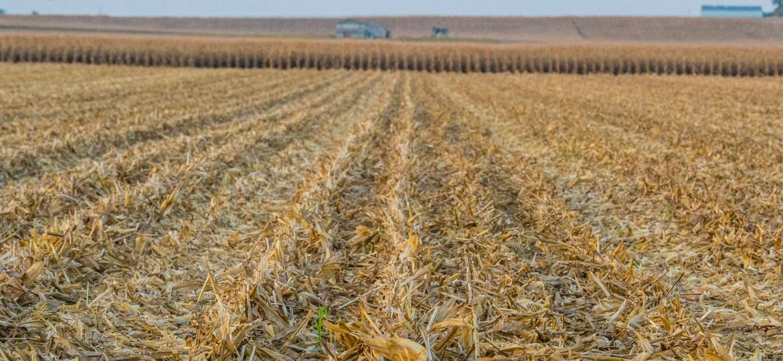 national corn handbook