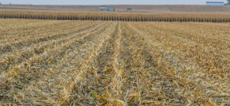In the United States, the vast majority of corn is grown from genetically engineered seed. Here, a central Illinois Farmer harvests his corn crop.