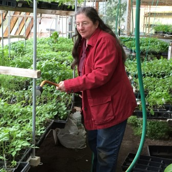 Beekeeper and organic farmer Harriet Behar waters plants in her greenhouse in Crawford County last year. Behar is critical of Wisconsin's proposed plan to protect state bee populations, which have some of the highest winter die-off rates in the country. She says the plan does not do enough to encourage practices that could lead to less pesticide use.