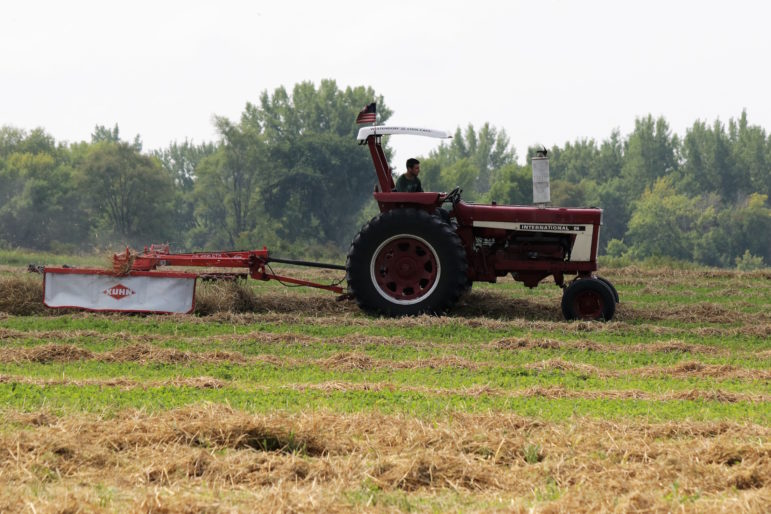 Matthew Canfield rides in tractor as he rakes over straw.