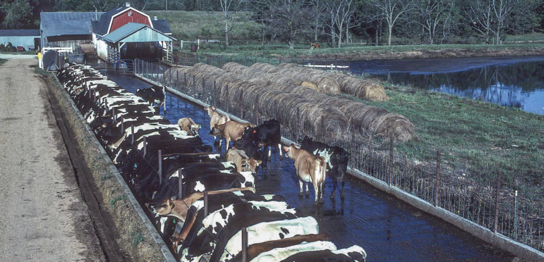 Information on factory farms is spotty at best. The government has been hogtied from doing more. - Investigate Midwest