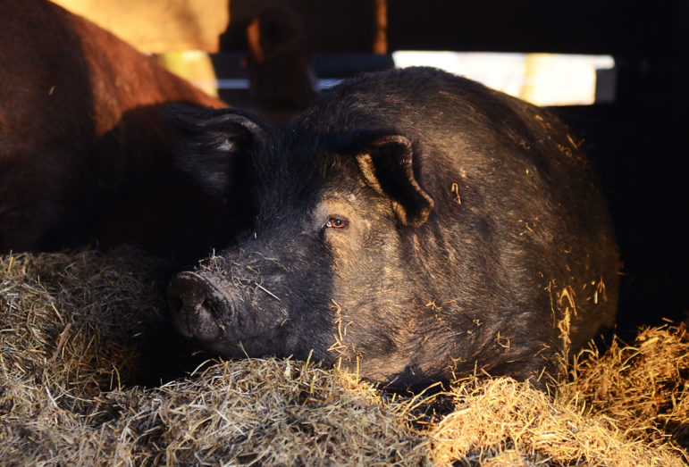 Jeffery lays in the hay.